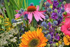 flowers-910846_960_720